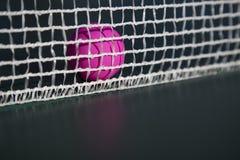 Esfera de tênis cor-de-rosa da tabela na rede imagens de stock royalty free