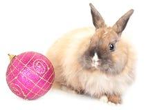 Esfera do coelho e do vermelho Foto de Stock Royalty Free