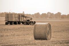 Esfera do trigo do campo a plat Fotografia de Stock