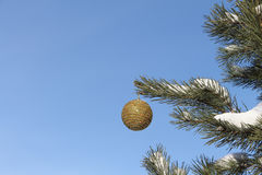 A esfera que pendura em um ramo Imagem de Stock