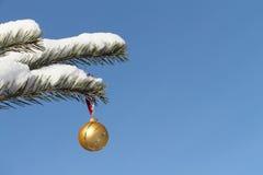 A esfera que pendura em um ramo Fotografia de Stock Royalty Free