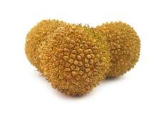 Esferas da flor do Platanus Imagem de Stock
