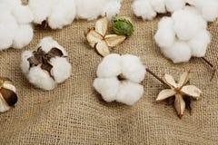 Esferas de algodão Fotografia de Stock