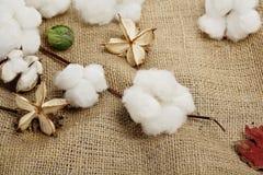 Esferas de algodão Imagens de Stock