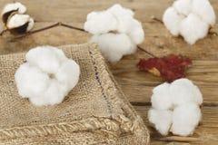 Esferas de algodão Fotos de Stock