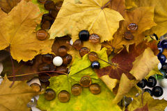 Esferas de vidro na folha do outono Fotografia de Stock Royalty Free