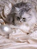 Esferas e gato do Natal Imagem de Stock