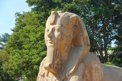 Esfinge de Memphis Imágenes de archivo libres de regalías