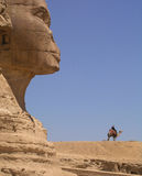 Esfinge y camello Imagen de archivo libre de regalías