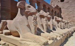 Esfinges com as cabeças dos carneiros no templo de Karnak Luxor Egypt Fotografia de Stock