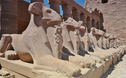 Esfinges con las cabezas de ovejas en el templo de Karnak Luxor Egipto Fotografía de archivo