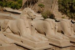 esfinges RAM-dirigidas en el templo de Karnak, Luxor imagenes de archivo