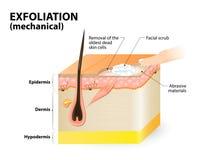 esfoliação cosmetology ilustração royalty free