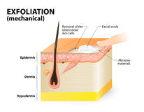 esfoliação cosmetology Foto de Stock Royalty Free