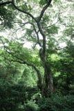 Eshowe Forest Stock Photos