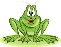 Żeńska żaba Fotografia Royalty Free