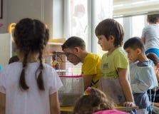 Eskisehir, die Türkei - 5. Mai 2017: Vorschulkinder, die ein Tiertagesereignis im Kindergarten beachten Lizenzfreie Stockbilder