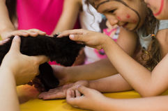 Eskisehir, Turkey - May 05, 2017:  Children hands holding a black kitty on a table in a classroom. Stock Photography