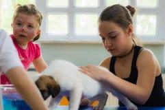 Eskisehir, Turquie - 5 mai 2017 : Enfants préscolaires s'occupant un événement animal de jour dans le jardin d'enfants Photos libres de droits