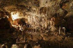 Esloveno da caverna de Postojna: Postojnska jama Fotografia de Stock Royalty Free