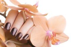 Esmalte de uñas de Brown en los clavos Fotos de archivo