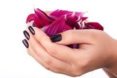 Esmalte de uñas rojo oscuro Imagenes de archivo