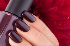 Esmalte de uñas rojo oscuro Imagen de archivo libre de regalías