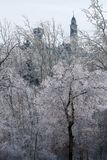 Esmalte em árvores Imagens de Stock Royalty Free