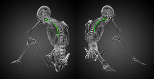 Esophagus. 3d rendering illustration of the esophagus Royalty Free Stock Photo