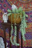Esoteric decoration with succulents. Esoteric decoration with succulent peace of mind colored stock photo