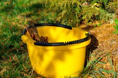 Esox lucius in the yellow bucket Royalty Free Stock Images