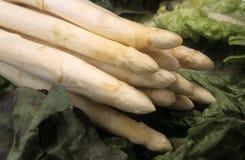 Espárrago blanco vegetal Imagen de archivo libre de regalías