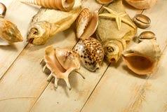 Espèce marine Photographie stock