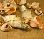 Espèce marine Images libres de droits