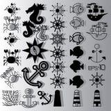 Espèce marine Image stock