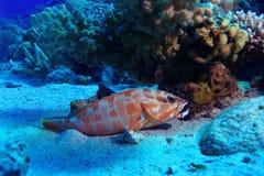 Espèce marine Image libre de droits
