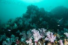 espèce marine autour du récif coralien au sommet de Hin Khao près de Bara Photo stock