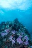 espèce marine autour du récif coralien au sommet de Hin Khao près de Bara Images libres de droits