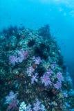 espèce marine autour du récif coralien au sommet de Hin Khao près de Bara Photos libres de droits