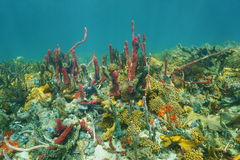 Espèce marine colorée la Caraïbe de fond de la mer sous-marin Photos libres de droits