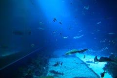 Espèce marine dans l'aquarium d'eau salée Photo libre de droits