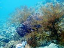 Espèce marine de mer d'Andaman de la Thaïlande Photos libres de droits
