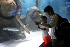 Espèce marine de observation de maman et de fils Image libre de droits