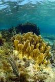 Espèce marine et corail aquatiques sous-marins Photos stock