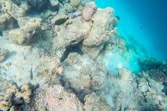 Espèce marine exotique près d'île des Maldives Photo stock