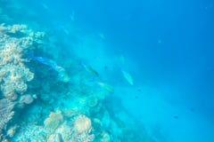Espèce marine exotique près d'île des Maldives Photos stock