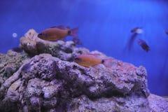 Espèce marine, parc Hong Kong d'océan Images stock