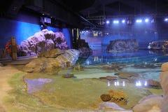 Espèce marine, parc Hong Kong d'océan Photographie stock