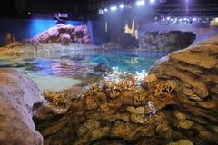 Espèce marine, parc Hong Kong d'océan Photo libre de droits