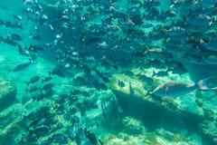 Espèce marine sous-marine Image stock